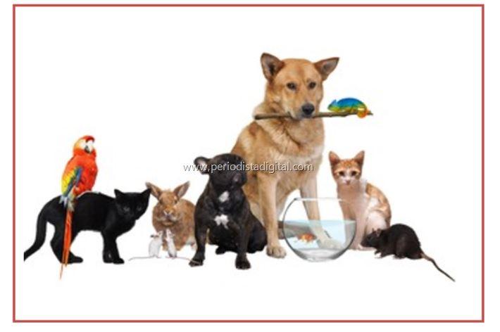 Mascotas preferidas