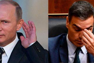 Ridículo mundial de Pedro Sánchez: Vladimir Putin se chotea del socialista como ya hicieron Marruecos y Turquía