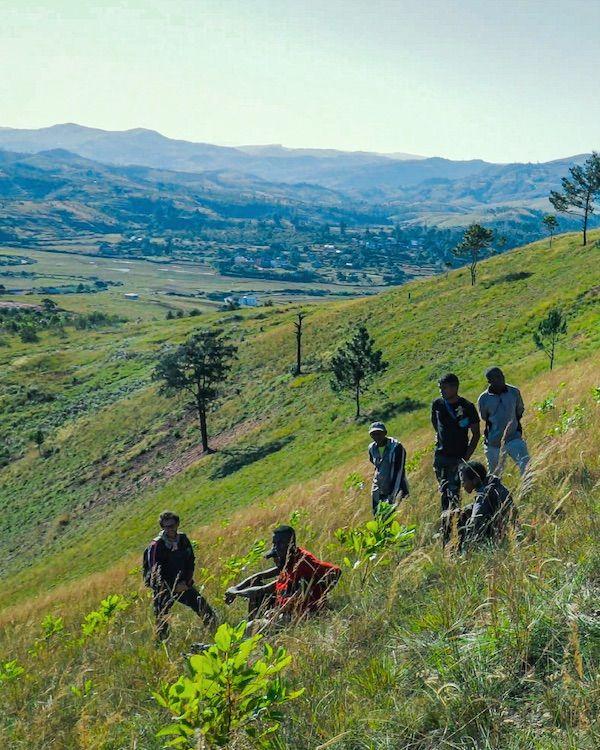Treedom destaca la importancia del cuidado de los bosques en España