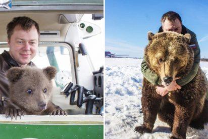 'Mansur', el osezno adoptado por aviadores rusos en 2016, es ahora una estrella de las redes sociales
