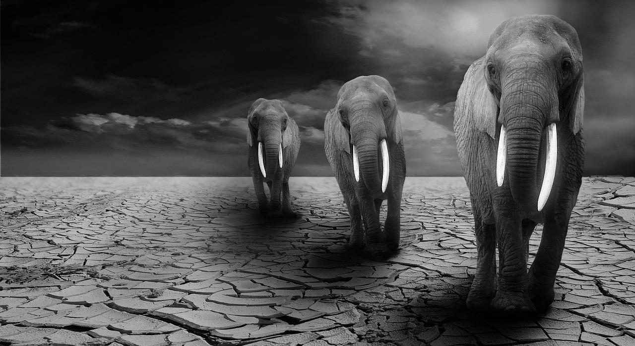 Los dos elefantes se pelean a muerte en plena actuación en un circo repleto de gente