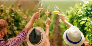 Rutas del Vino en Valladolid
