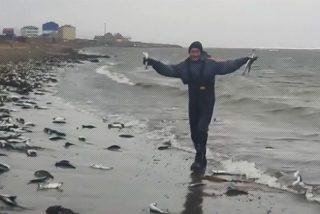 Miles de arenques asaltan así la costa de la isla rusa de Sajalín