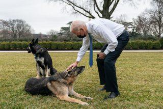 'Major', uno de los dos perros del presidente Biden, muerde a un empleado de la Casa Blanca