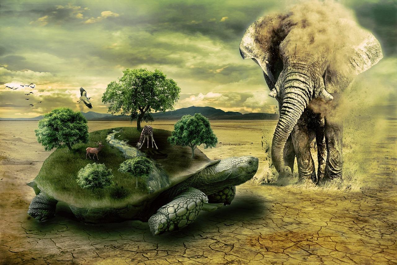 Cómo salvar a los elefantes a través de senderos olfativos