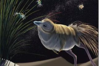 Así era el Shuvuuia, un 'dinosaurio enano' que cazaba en la oscuridad