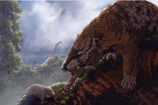 Así era el curioso comportamiento de los mamíferos en la época de los dinosaurios