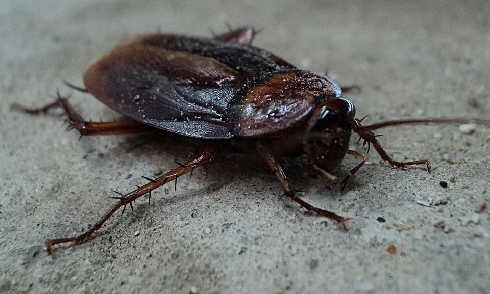 El Ataque de las Cucarachas: asaltan un restaurante arrojando más de 1.000 asquerosos insectos en su interior
