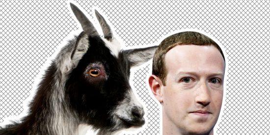 Mark Zuckerberg bautiza a su cabra con el nombre 'Bitcoin' y los internautas interpretan que apoya la criptomoneda
