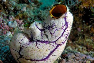 Este curioso animal se regenera incluso si se parte en tres trozos