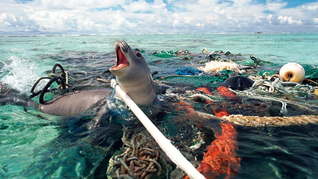Científicos descienden a la tercera fosa oceánica más profunda y encuentran algo aterrador: ¡plástico!