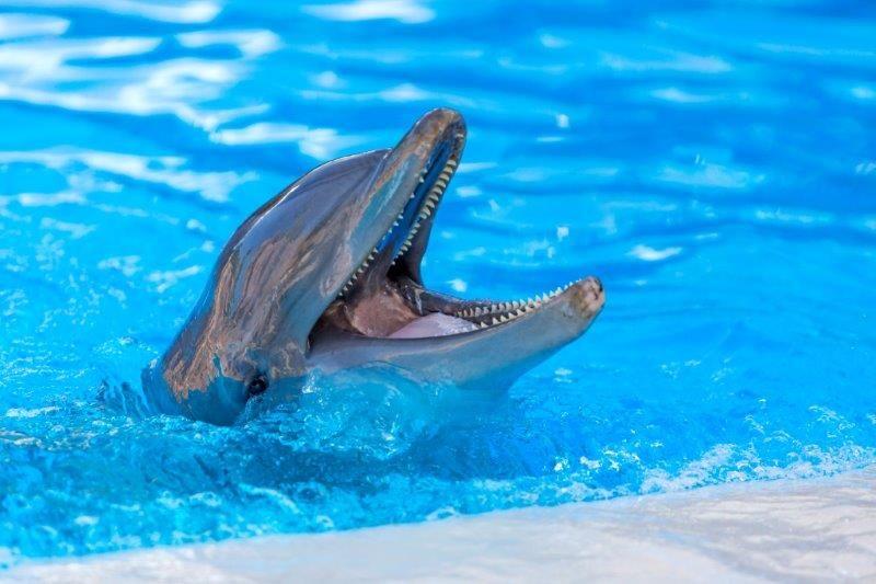 Loro Parque participa en una investigación que logra determinar la edad de los cetáceos a partir de su ADN