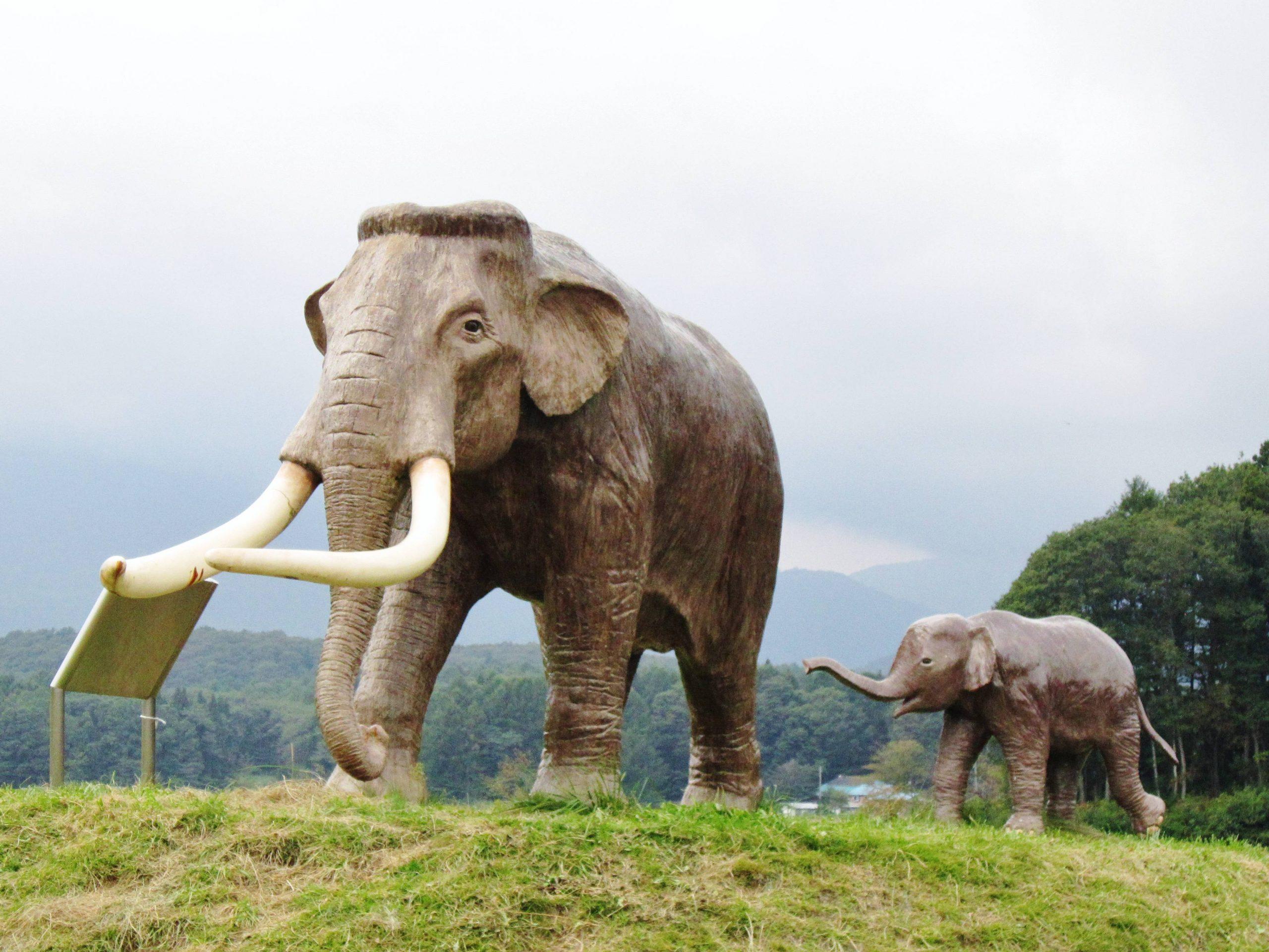 Así fue la extraña evolución al enanismo de un mamífero gigante