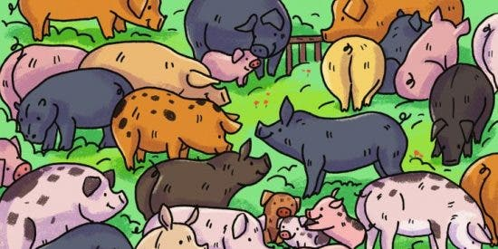 Reto Viral: en 10 segundos: encuentra al hipopótamo entre los cerditos