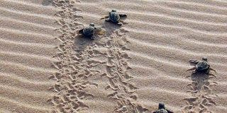 """Paradores participa en la presentación de la segunda campaña """"Tortugas en el Mediterráneo"""""""