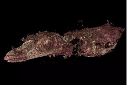 Así es el extraño fósil del lagarto que se convirtió en pájaro