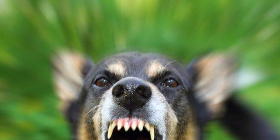 Un perro ataca brutalmente la cabeza de una mujer en Alicante