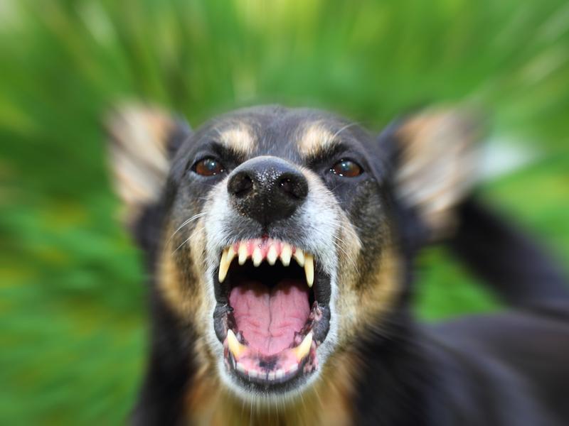 Un niño de tres años muere al caer por la ventana y ser atacado sin piedad por sus propios perros