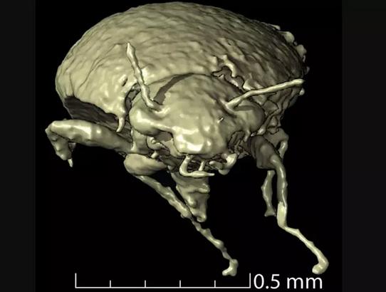 Los científicos logran recrear a un insecto prehistórico por las heces de los fósiles de dinosaurio