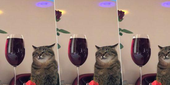 Este es 'Sepán', el gato sensación de TikTok que nos recuerda esas fiestas aburridas a las que todos hemos ido