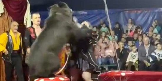 El momento en que el oso ataca a su domadora tres veces consecutivas en plena actuación