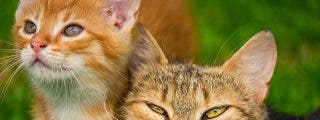 El gato con botas y pelotas se enfrenta a la cobra y salva a su dueño