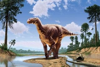Hallan en Castellón los restos de una especie desconocida de dinosaurio