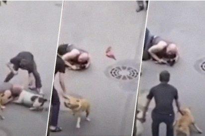 Un hombre protege con su cuerpo a su viejo perro del feroz ataque de dos american staffordshire terriers