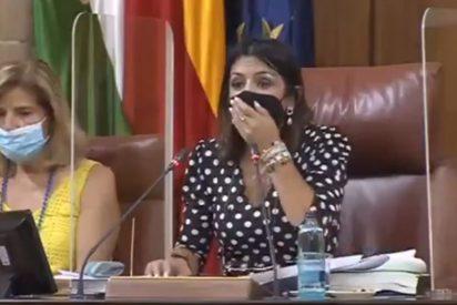 El instante en el que una rata enorme 'asalta' el Parlamento andaluz cuando Susana Díaz iba a ser nombrada senadora