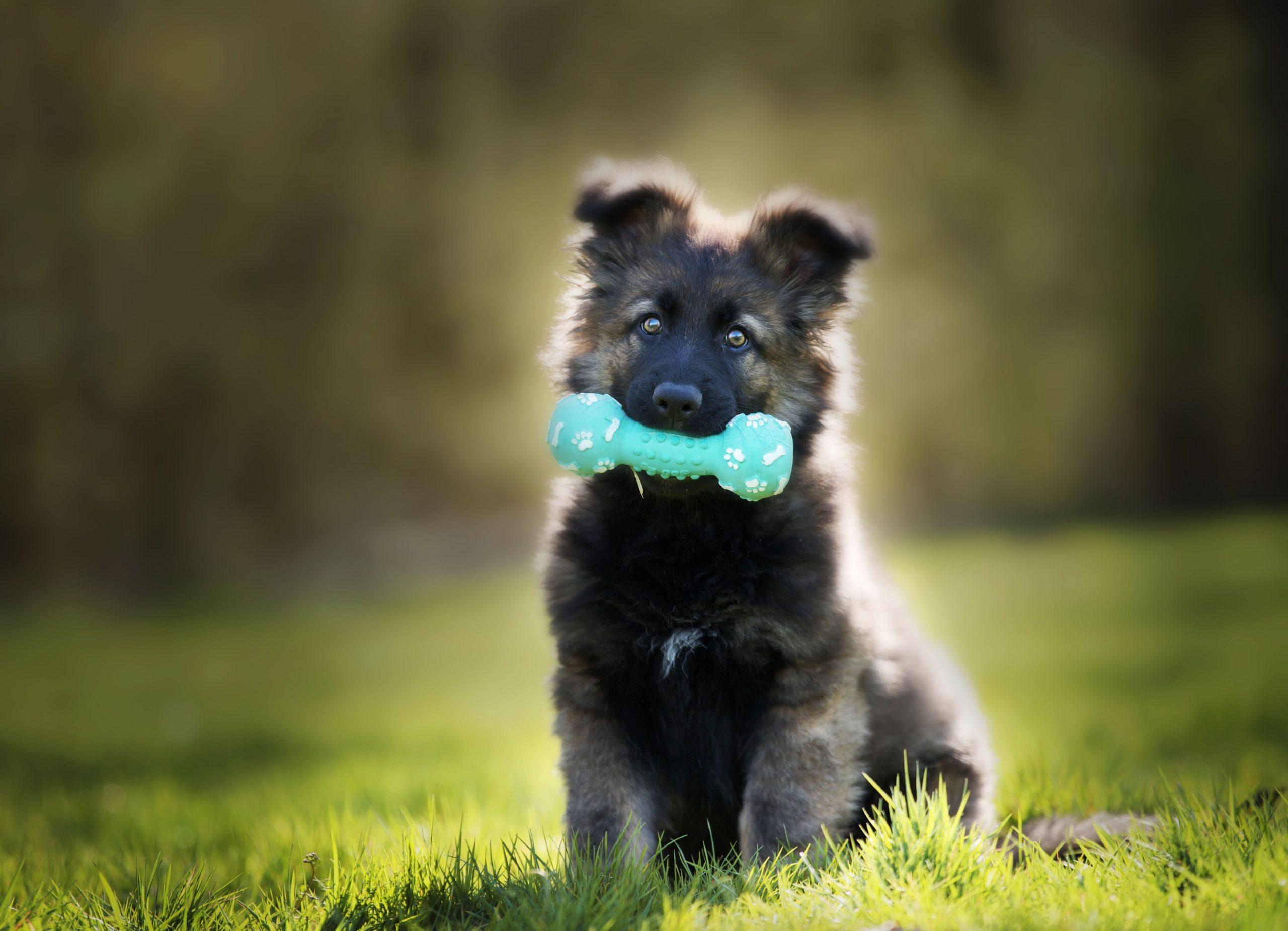 Barakaldo Tienda Veterinaria lanza su Condroprotector para cachorros