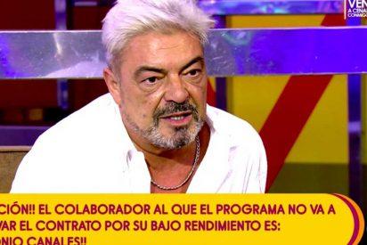 "Antonio Canales es despedido en directo en 'Sálvame' pero se venga: ""Os vais a pique"""