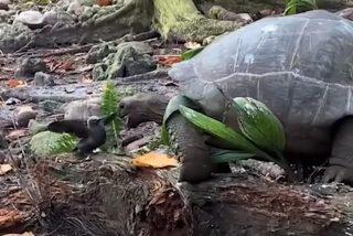 La tortuga caníbal se merienda al pajarito