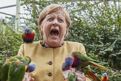 Angela Merkel sobrevive al ataque feroz de una bandada de loros