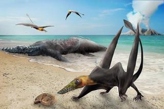 Encuentran en Chile fósiles de un dragón volador del Jurásico