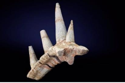 Descubren un dinosaurio nunca visto por un collar fósil de púas