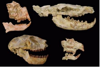 Cómo el cambio climático diezmó los mamíferos hace 30 millones de años