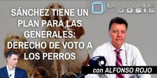 Sánchez tiene un plan para las generales: derecho de voto a los perros
