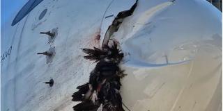 Pánico en Madrid: Un buitre se estrella contra el morro de un avión
