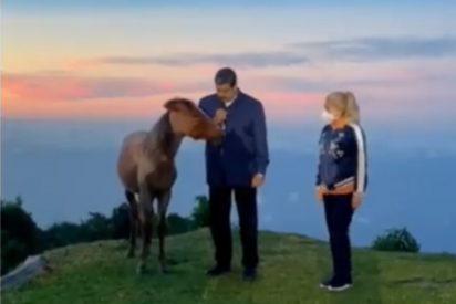 El dictador Maduro quiere ser Blancanieves: Tras hablar al pajarito de Chávez, ahora lo hace con un caballo