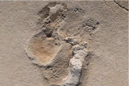 Descubren huellas prehumanas de seis millones de años en Creta