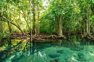 Así es el misterioso 'mundo perdido' de manglares descubierto en el interior de Yucatán